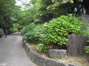 2010_0613_081807ajisai